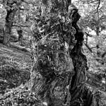 En Nature (Ardèche)